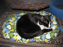 Cat on green floral bed