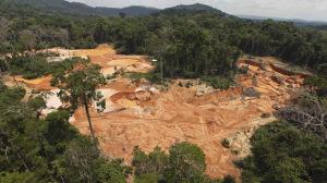 Devastated rainforest in São Paulo