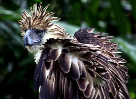 Philippine Eagle Center (PEC) on the outskirts of Davao City